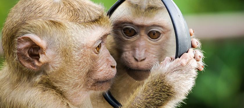 interior-neurona-espejo